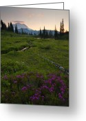Meadow Greeting Cards - Mountain Heather Sunset Greeting Card by Mike  Dawson