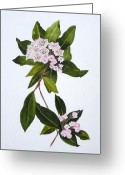 Mountain Laurel Greeting Cards - Mountain Laurel Greeting Card by Jean Blackmer