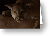 Puma Greeting Cards - Mountain Lion A Large Graceful Cat Greeting Card by Christine Till