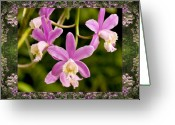 Red Orchid Blooms Greeting Cards - Mountain Orchids Greeting Card by Bell And Todd
