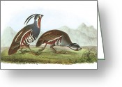 Quail Greeting Cards - Mountain Quail Greeting Card by John James Audubon