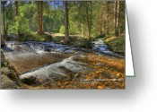 Sean Allen Greeting Cards - Mountain Stream Greeting Card by Sean Allen