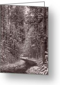 Montana Greeting Cards - Mountain Trail Yellowstone BW Greeting Card by Steve Gadomski
