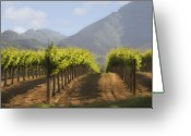 Mountain Vineyards Greeting Cards - Mountain Vineyard Greeting Card by Sharon Foster