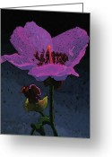 Point Of View Greeting Cards - Mountain Wildflower Greeting Card by Bob Coonts