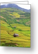 Rural Scene Greeting Cards - Mountainous Rice Field Greeting Card by Akari Photography