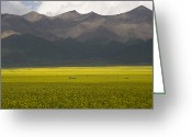 World Culture Greeting Cards - Mountains And Rapeseed Fields Greeting Card by David Evans