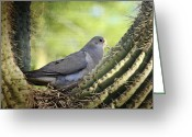 Saguaro Cactus Greeting Cards - Mourning Dove in the Morning  Greeting Card by Saija  Lehtonen