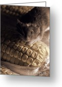 Janeen Wassink Searles Greeting Cards - Mouse and Field Corn Greeting Card by Janeen Wassink Searles