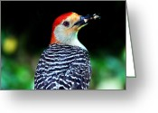 Woodpecker Photos Greeting Cards - Mouth Full Greeting Card by Skip Willits