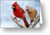 Red Birds Greeting Cards - Mr. and Mrs. Cardinal Greeting Card by Bonnie Barry