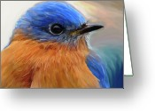  Bluebird Greeting Cards - Mr. Blue Greeting Card by Patti Siehien