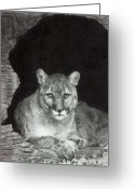 Big Cats Greeting Cards - Mr. Dodger Greeting Card by Marlene Piccolin