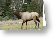 Canadian Rockies Greeting Cards - Mr Majestic Greeting Card by Bob Christopher