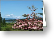 Dogwood Lake Greeting Cards - Mt Helens Behind the Dogwood Greeting Card by Charles Robinson