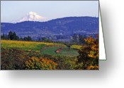 Red Fall Colors Greeting Cards - Mt. Hood from a Dundee Hills Vineyard Greeting Card by Margaret Hood