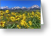 Teton National Park Greeting Cards - Mt. Moran In Grand Teton National Park Greeting Card by Rob Daugherty - RobsWildlife.com