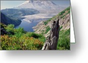 Physical Geography Greeting Cards - Mt. St. Helens Greeting Card by Danielle D. Hughson