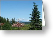 Dogwood Lake Greeting Cards - Mt St Helens in the Distance - A Panorama Greeting Card by Charles Robinson