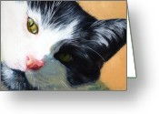 Black And White Cat Greeting Cards - Muff Greeting Card by Pat Burns