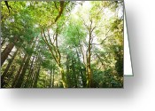 Forrest  Greeting Cards - Muir Woods Greeting Card by Ariane Moshayedi