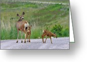 Motherhood Greeting Cards - Mule Deer Doe and Twin Fawns Greeting Card by Karon Melillo DeVega