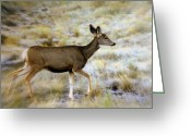 Marty Koch Greeting Cards - Mule Deer On The Move Greeting Card by Marty Koch