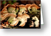 I Want You Greeting Cards - Multi Colored Gill Polypore Fungi 1555 Greeting Card by Suzanne  McClain
