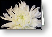 Wrap...floral Greeting Cards - Mum Dressed In Black Elegance Greeting Card by Marsha Heiken