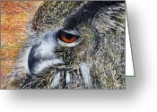 Long Eared Owl Greeting Cards - Mumble Greeting Card by John Hebb