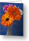 Daisies Greeting Cards - Mums in striped vase Greeting Card by Garry Gay