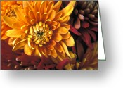 Flowers Greeting Cards Greeting Cards - Mums the Word Greeting Card by Kathy Yates