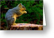 Feed Greeting Cards - Munchin on Seeds Greeting Card by Karen M Scovill