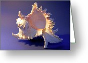 Skeletal Greeting Cards - Murex ramosus Seashell Greeting Card by Frank Wilson