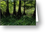 Silhouettes Greeting Cards - Murray Lake Cypress Trees Greeting Card by Iris Greenwell
