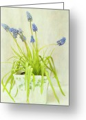 Indoors Greeting Cards - Muscari In Pot, Textured Greeting Card by Susan Gary