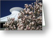 Magnolia Bloom Greeting Cards - Museum of Vancouver Magnolia Greeting Card by Pierre Leclerc