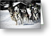 Sleigh Greeting Cards - Mushing Greeting Card by Daniel Wildi Photography