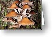 Oldgrowth Greeting Cards - Mushroom Coven Greeting Card by Joshua Bales