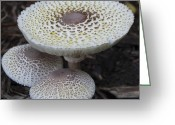 Mold Greeting Cards - Mushroom Trio Squared Greeting Card by Teresa Mucha