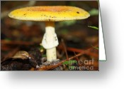 Toadstools Greeting Cards - Mushrooms-4 Greeting Card by LaMarre Labadie