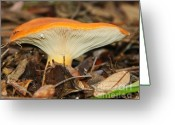 Toadstools Greeting Cards - Mushrooms-6 Greeting Card by LaMarre Labadie
