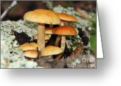 Toadstools Greeting Cards - Mushrooms-8 Greeting Card by LaMarre Labadie