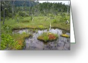 U.s. National Forest Greeting Cards - Muskeg Bog With Ponds, Mitkof Island Greeting Card by Konrad Wothe