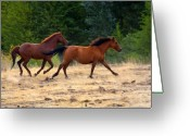 Wild Horses Greeting Cards - Mustang Gallop Greeting Card by Mike  Dawson