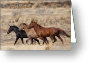 Wild Horses Greeting Cards - Mustang Trio Greeting Card by Mike  Dawson