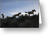 Pacific Coast States Greeting Cards - Mustangs Wander Free In The South Greeting Card by Melissa Farlow
