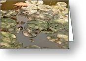 Plant Greeting Cards - Muted Lilypads Greeting Card by Kimberly Gonzales