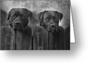Pitbull Greeting Cards - Mutt and Jeff Greeting Card by Larry Marshall
