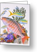 Mutton Greeting Cards - Mutton Snapper reef Greeting Card by Carey Chen